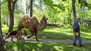 camel_t470